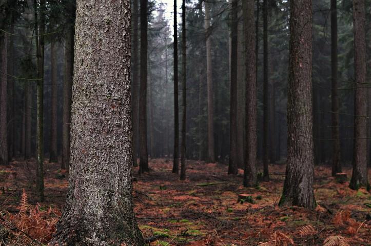 Neujahrswald