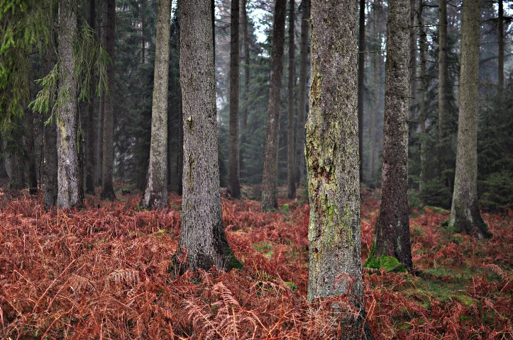 Waldneujahr