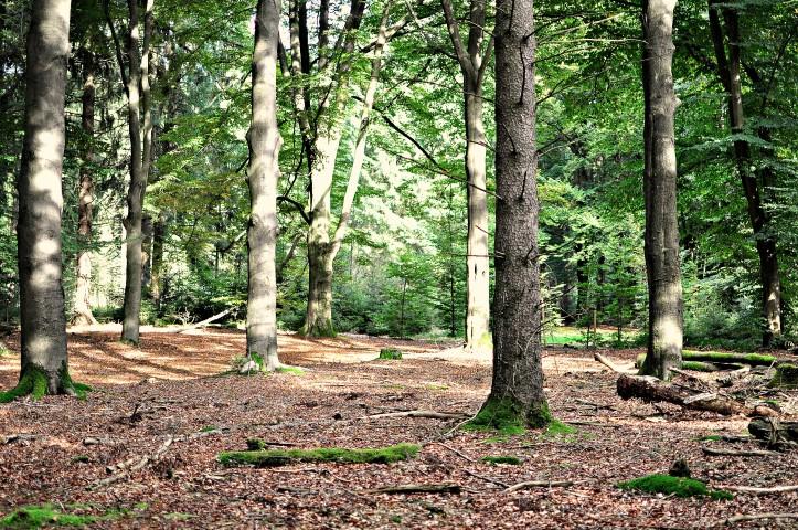 Waldtag 5